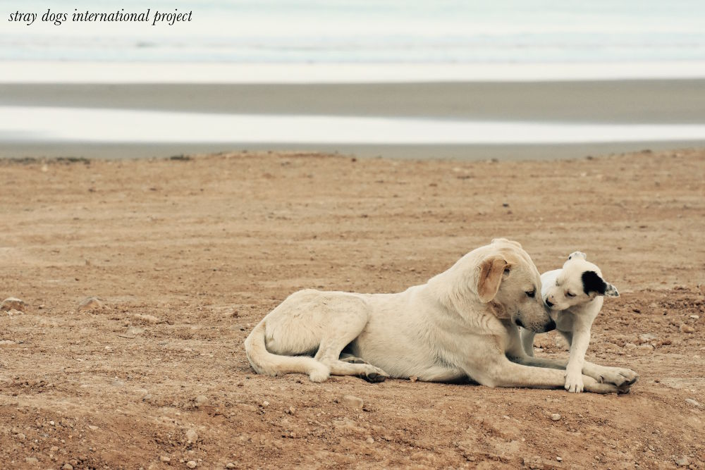 stray dogs international project