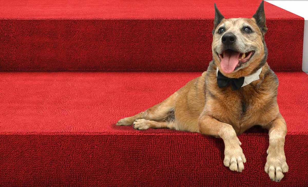 vorrei un cane da red carpet